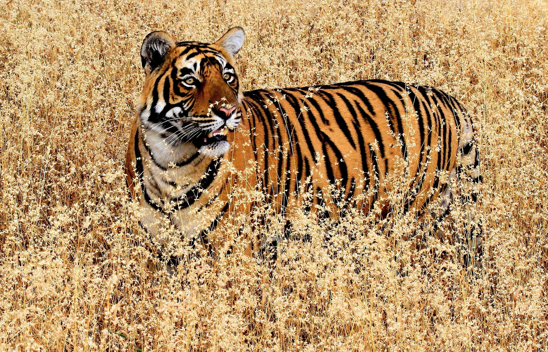 Aman-i-Khas, Ranthambhore, India. © Amanresorts