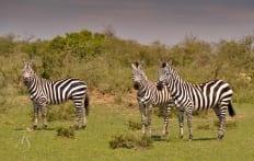 Kenya © Travel+Style