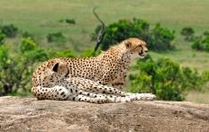 Cottar's 1920s Safari Camp, Masai Mara, Kenya © TravelPlusStyle.com