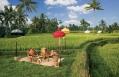 Picnic Escape. © Ubud Hanging Gardens
