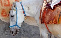 Mule in Fira. Santorini, Greece. © Travel+Style