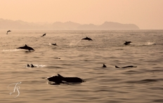 Dolphins in the Gulf of Oman. © Travel+Style