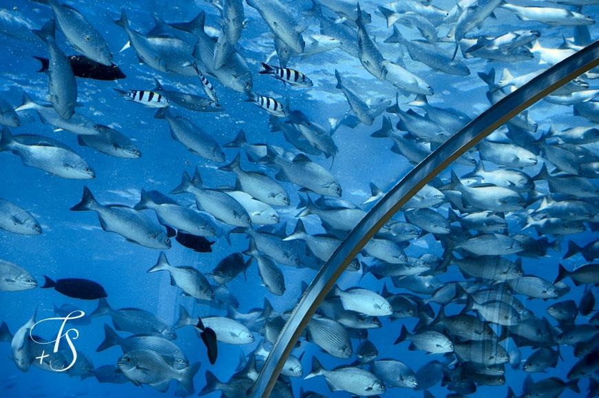 ithaa undersea restaurant conrad maldives rangali islandi travelstyle - Underwater World Restaurant