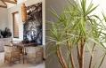 Caprivi Suite. The Olive Exclusive, Windhoek. © Big Sky Namibia