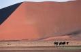 Ostrich, Little Kulala, Sossusvlei, Namibia. © Wilderness Safaris