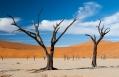 Dead Vlei, Little Kulala, Sossusvlei, Namibia. © Wilderness Safaris