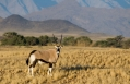 Oryx, Little Kulala, Sossusvlei, Namibia. © Wilderness Safaris
