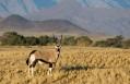 Oryx, Little Kulala, Sossusvlei, Namibia. © Wilderness Safaris