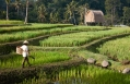 Rice field. Mandapa, a Ritz-Carlton Reserve, Ubud, Indonesia. © The Ritz-Carlton Hotel Company