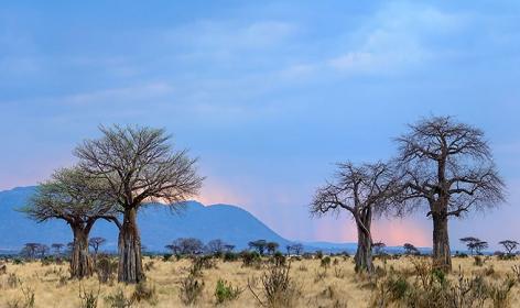 Jabali Ridge, Ruaha National Park, Tanzania. TravelPlusStyle.com