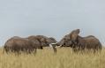 Angama Mara, Maasai Mara, Kenya. © Angama
