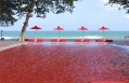 The red pool at The Library, Koh Samui. © The Library, Koh Samui