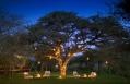 Lantern tree. Marataba Safari Company, South Africa. © Marataba