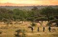 Safari walk © Lion Sands Private Game Reserve