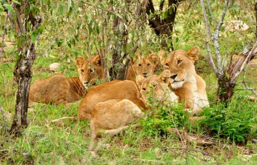 Masai Mara, Kenya © Travel+Style