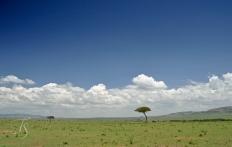 Masai Mara. © Travel+Style