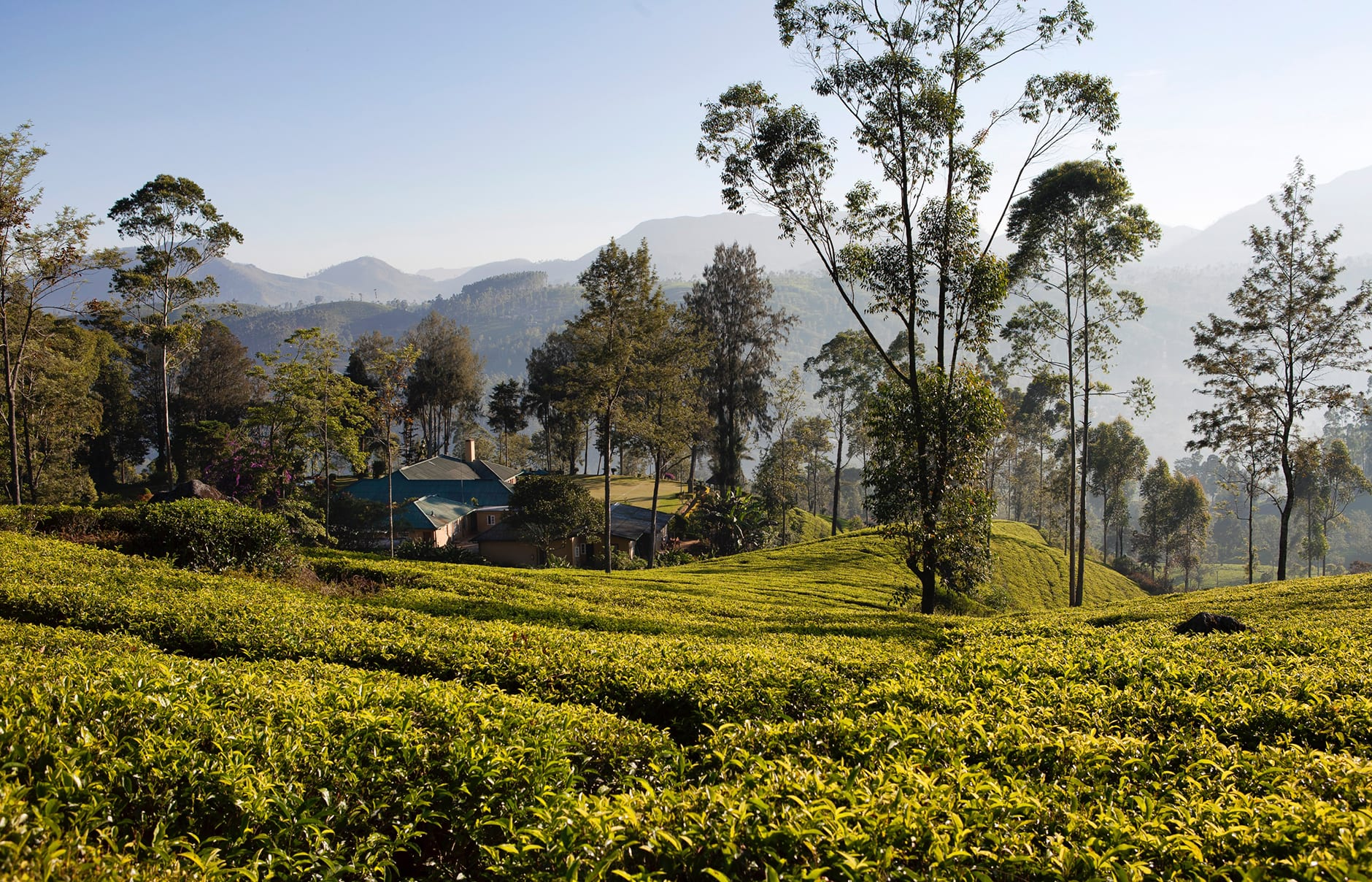 Norwood Bungalow. Ceylon Tea Trails, Sri Lanka. Hotel Review by TravelPlusStyle. Photo © Resplendent Ceylon
