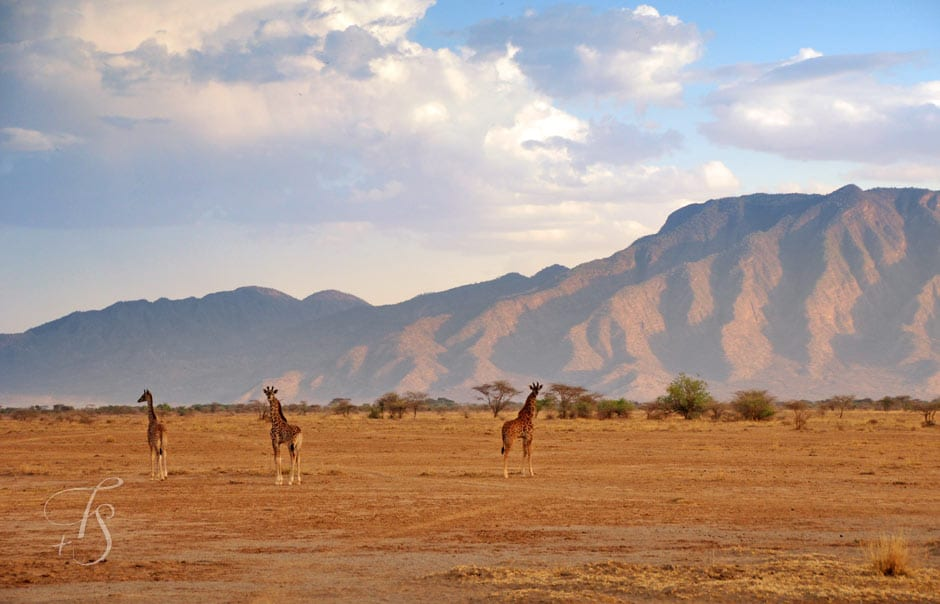 Kenya A Microcosm Of Africa 171 Luxury Hotels Travelplusstyle