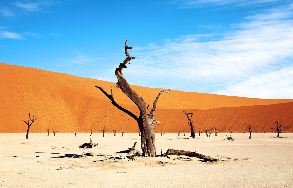 Dead Vlei, Little Kulala, Sossusvlei, Namibia. © Wilderness Safaris